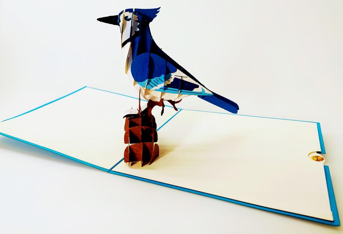 carte pop up oiseau - Geai bleu un bel oiseau intelligent-carte Pop Up 3D, carte de voeux, carte de félicitations, souvenirs chez cartepopup.com